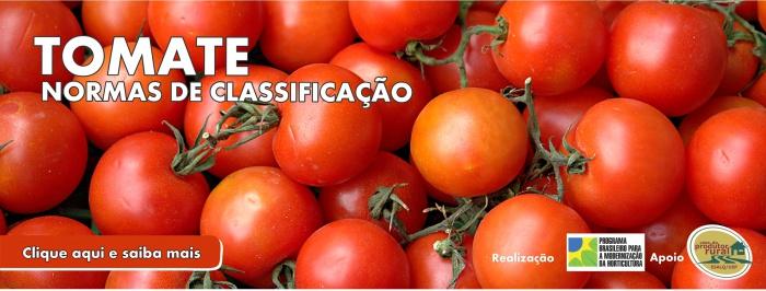Banner - Normas de classificação - tomate