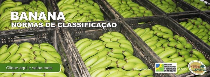 Normas de Classificação da Banana