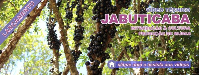 Banner - Vídeo Jabuticaba 1 e 2