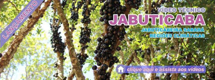 Banner - Videos Jabuticaba 3 e 4
