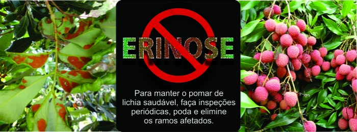 Lichia_Erinose