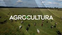 AgroCultura - Os impactos das mudanças climáticas na produção brasileira de soja