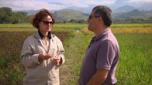 Sabores Regionais - arroz